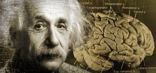 مغز آلبرت انشتين